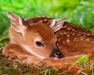 Udruženje za zaštitu životinja